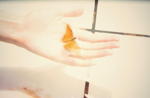 butterfly,2