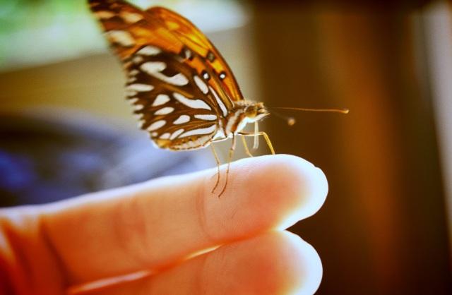 butterfly,3